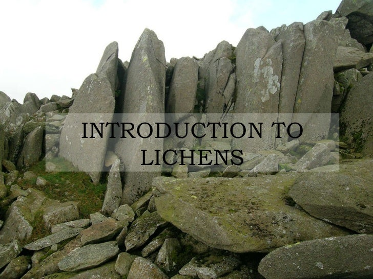 INTRODUCTION TO LICHENS