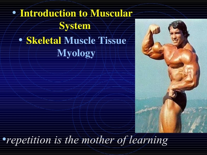 <ul><li>Introduction to Muscular System  </li></ul><ul><li>Skeletal  Muscle Tissue Myology </li></ul><ul><li>repetition is...