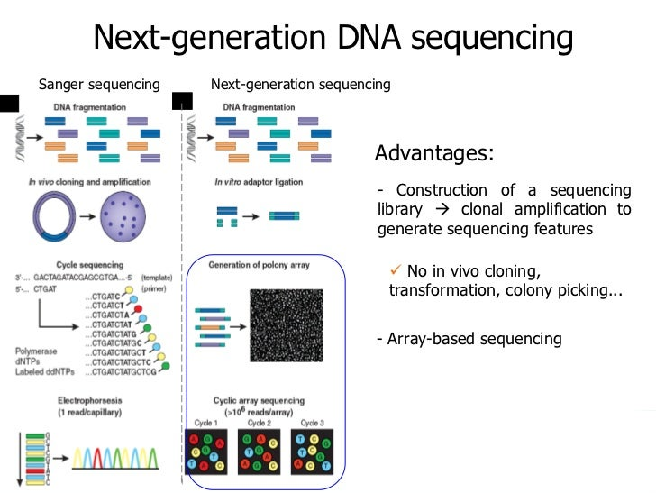 a comprehensive introduction and an analysis of the dna Genetic testing, also known as dna testing, allows the determination of bloodlines and the genetic diagnosis of vulnerabilities to inherited diseases in agriculture , a form of genetic testing known as progeny testing can be used to evaluate the quality of breeding stock.