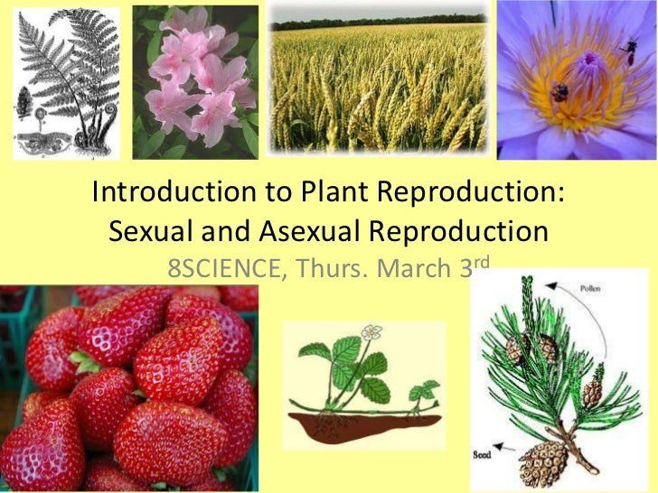 Introduction to Plant Reproduction: Sexual and Asexual Reproduction<br />8SCIENCE, Thurs. March 3rd<br />