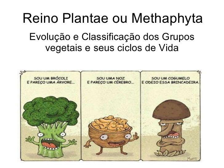 Introdução ao reino vegetal