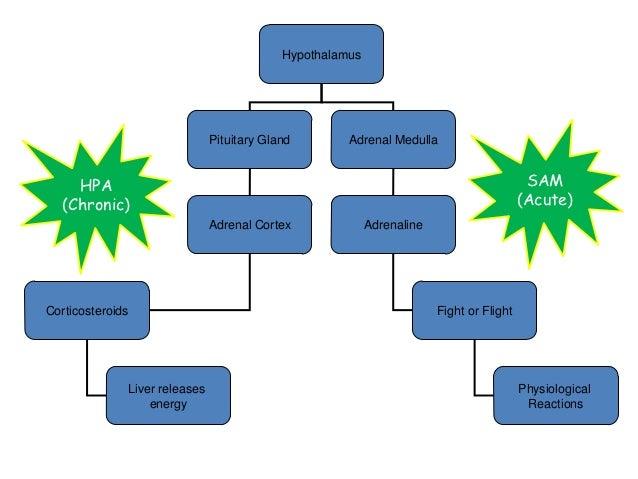 corticosteroids immune system suppression
