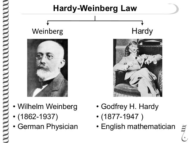 hardy weinberg essay This essay gives an account of one such quest that led to the second  in  parallel to the hardy–weinberg setting, unlike for autosomal loci.