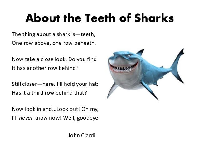 Funny shark teeth pictures