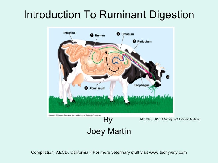 Intro to ruminant digestion