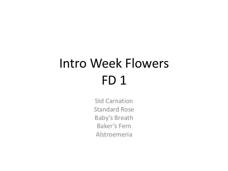 Intro Week Flowers       FD 1     Std Carnation     Standard Rose     Baby's Breath      Baker's Fern      Alstroemeria