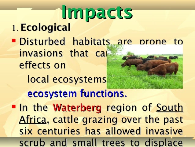an essay on the effects of the introduction of foreign species on an ecosystem - the effects of foreign species introduction on an ecosystem the effects of foreign species introduction into an ecosystem are very profound from small microorganisms to species of large mammals, many foreign species introductions occur every day.