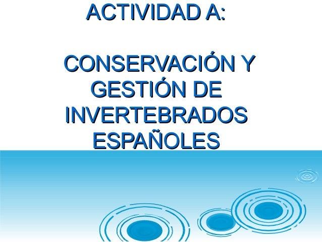 ACTIVIDAD A:ACTIVIDAD A: CONSERVACIÓN YCONSERVACIÓN Y GESTIÓN DEGESTIÓN DE INVERTEBRADOSINVERTEBRADOS ESPAÑOLESESPAÑOLES