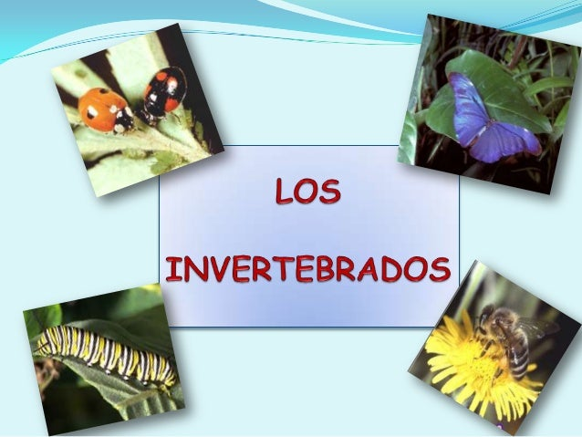 CLASES DE INVERTEBRADOSPoríferosCelenteradosPlatelmintosNematelmintosAnélidosMoluscosArtrópodosEquinodermos
