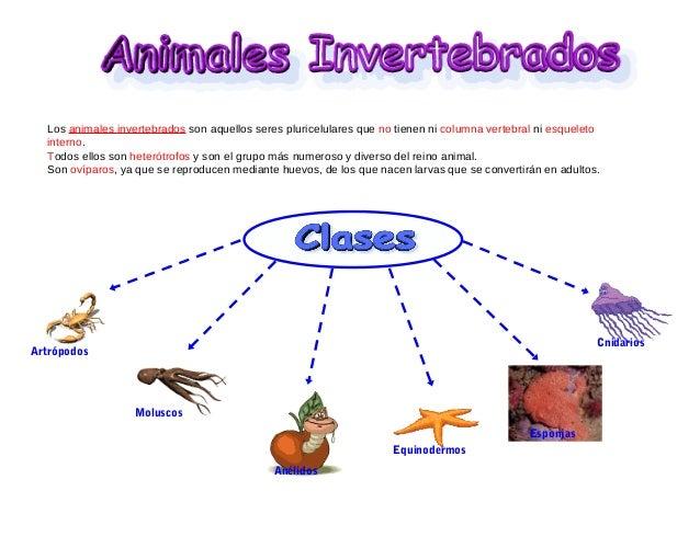 Invertebrados - Como se aparean los elefantes ...