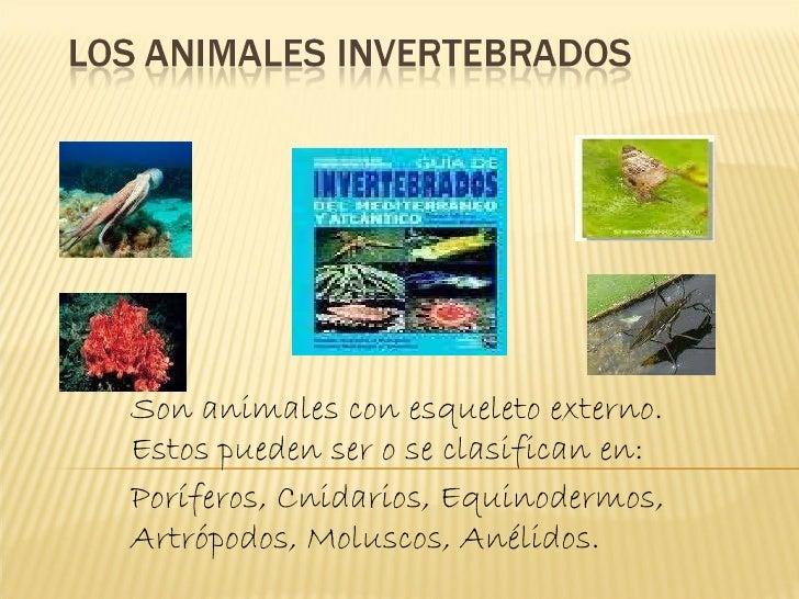 Invertebrados  grupo Delfina