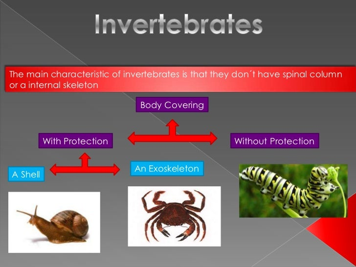 The main characteristic of invertebrates is that they don´t have spinal columnor a internal skeleton                      ...