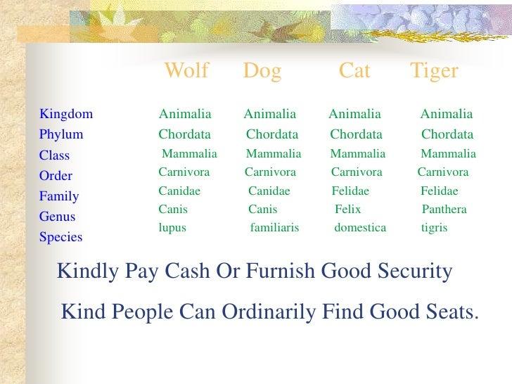 Wolf        Dog            Cat        Tiger Kingdom     Animalia    Animalia      Animalia     Animalia Phylum      Chorda...