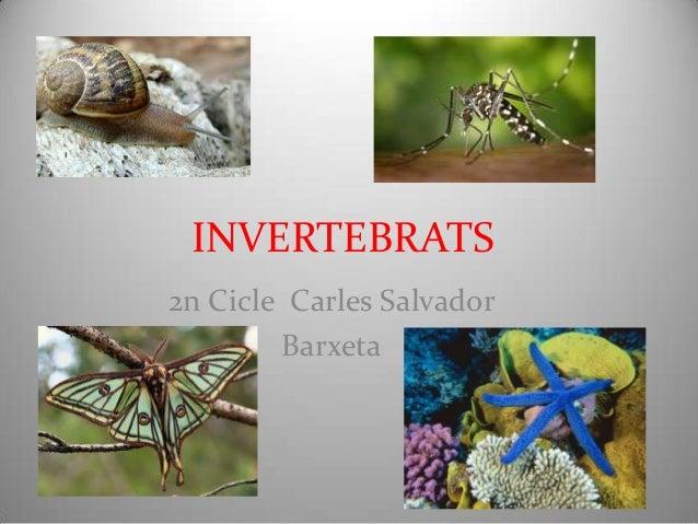 Invertebrats power point