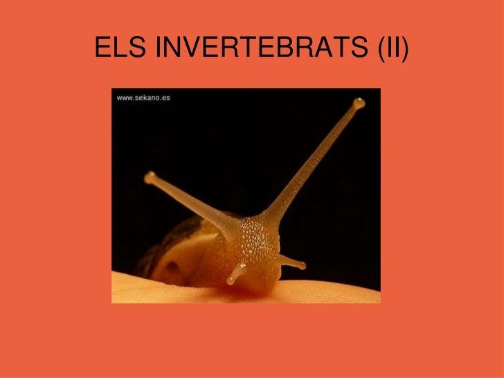 ELS INVERTEBRATS (II)<br />