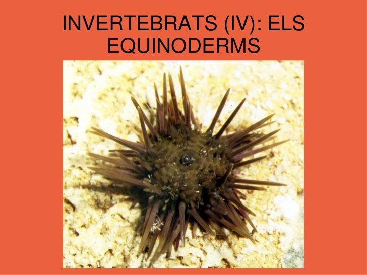 INVERTEBRATS (IV): ELS EQUINODERMS<br />