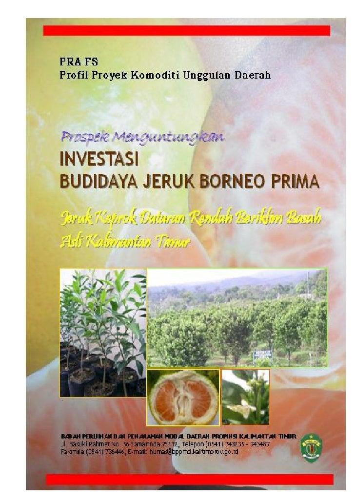 Prospek MenguntungkanInvestasi Budidaya Jeruk Borneo Prima