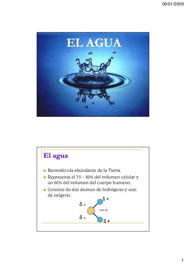 06/01/2009               EL AGUA     El agua  Biomolécula abundante de la Tierra.  Representa el 75 – 80% del volumen celu...
