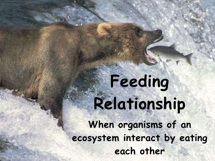 Feeding Relationship When organisms of an ecosystem interact by eating each other