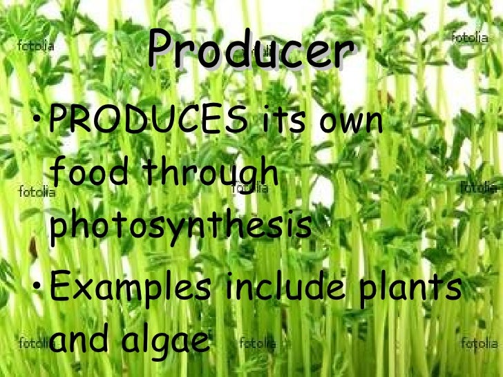 Producer <ul><li>PRODUCES its own food through photosynthesis </li></ul><ul><li>Examples include plants and algae </li></ul>