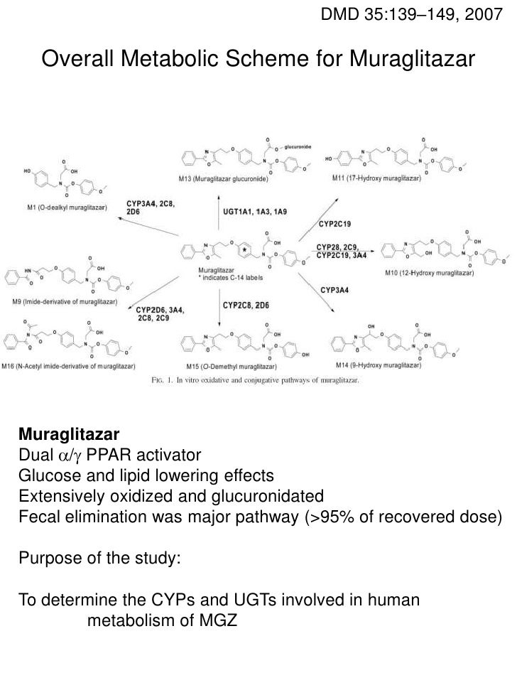 Involvement of multiple P450s and UDP-GTs in the in vitro metabolism of Muraglitazar