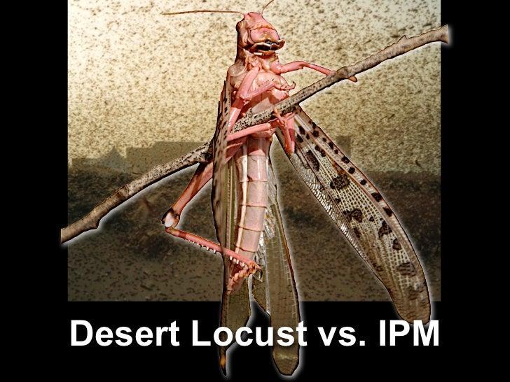 Desert Locust vs. IPM