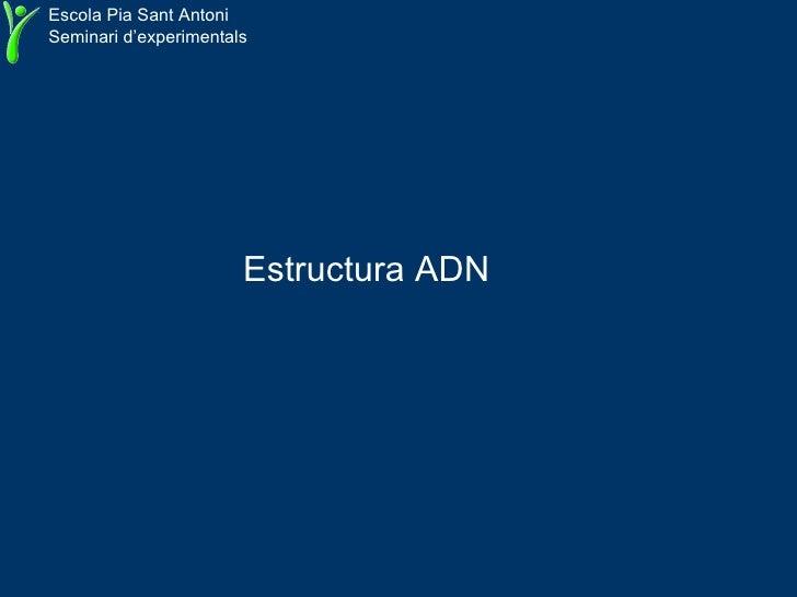 Estructura ADN   Escola Pia Sant Antoni Seminari d'experimentals