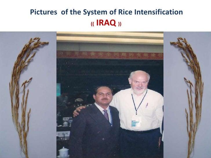 1044 Iraq System of Rice Intensifcation (SRI) Photos