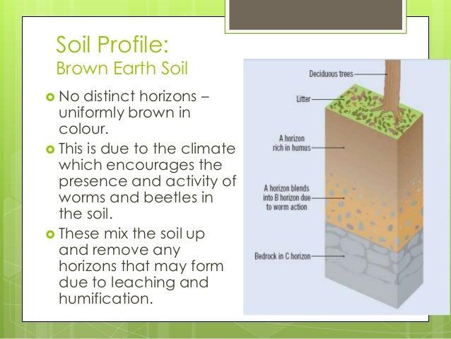 Soil Profile Brown Earth Soil
