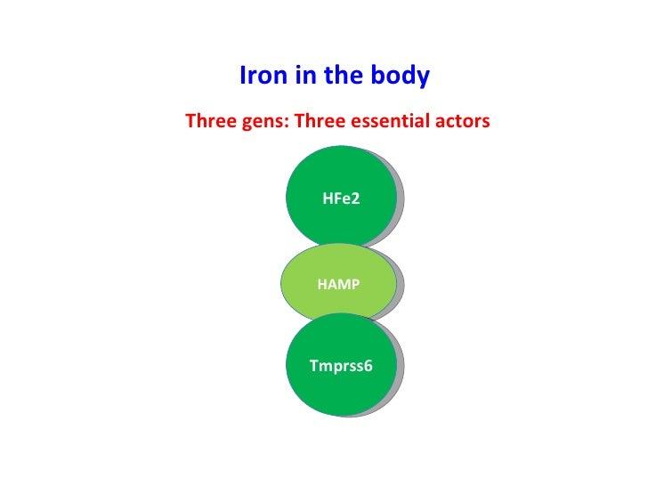 Iron in the body Three gens: Three essential actors HFe2 HAMP Tmprss6