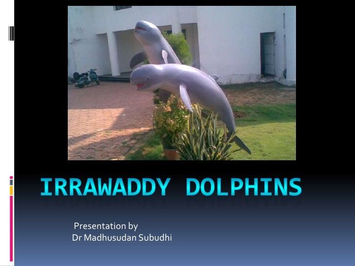 Irrawaddy DOLPHINS<br />Presentation by<br />Dr MadhusudanSubudhi<br />