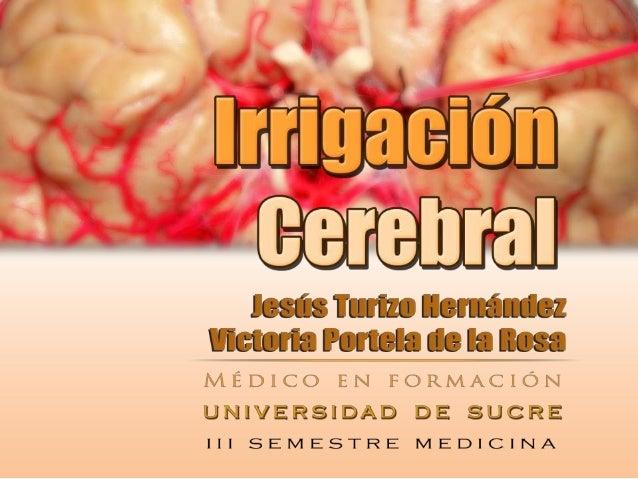 Irrigación cerebralLas arterias vertebrales Se unen Arteria basilarArteria cerebral posteriorArteria carótida interna A ca...