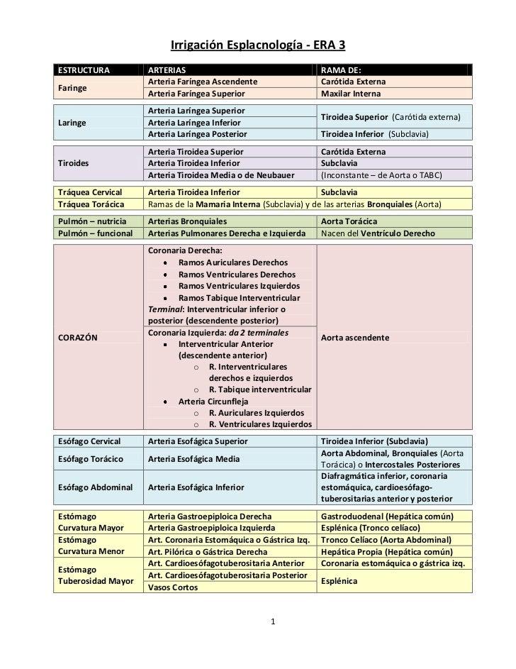 Irrigación Esplacnología - ERA 3ESTRUCTURA           ARTERIAS                                     RAMA DE:                ...
