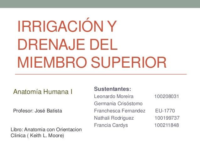 IRRIGACIÓN Y DRENAJE DEL MIEMBRO SUPERIOR Sustentantes: Leonardo Moreira 100208031 Germania Crisóstomo Franchesca Fernande...