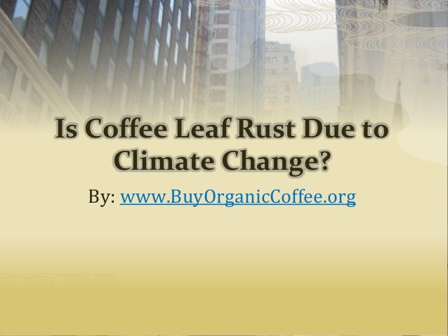 Is Coffee Leaf Rust Due to Climate Change