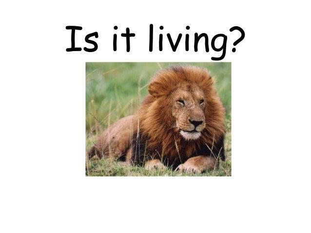 Is it-living