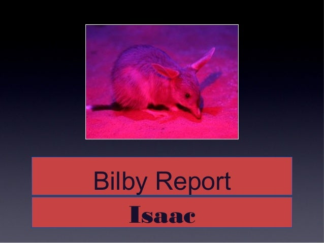 Bilby ReportBilby Report IsaacIsaac