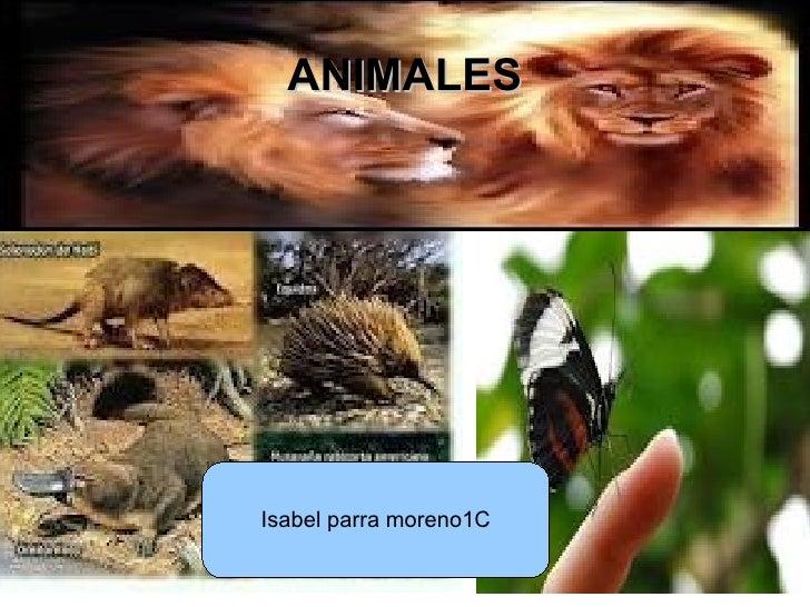 ANIMALESIsabel parra moreno1C