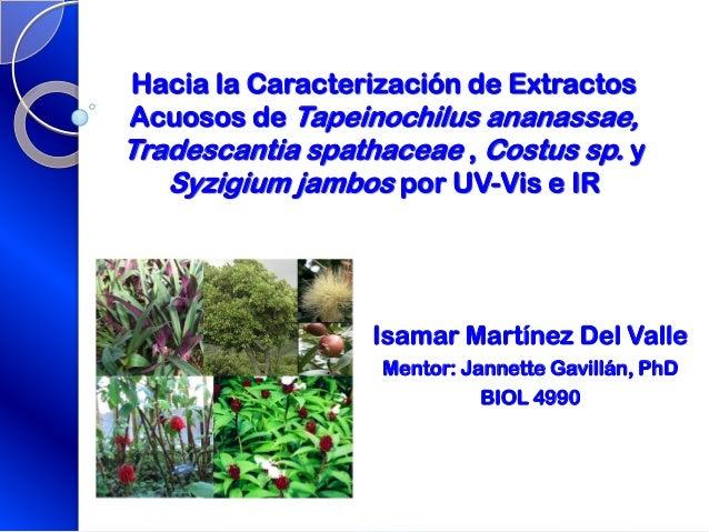 Hacia la Caracterización de ExtractosAcuosos de Tapeinochilus ananassae,Tradescantia spathaceae , Costus sp. ySyzigium jam...