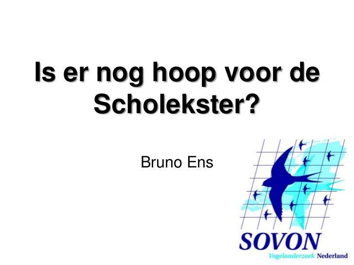 Is er nog hoop voor de scholekster - Bruno Ens - Landelijke Dag SOVON 2011