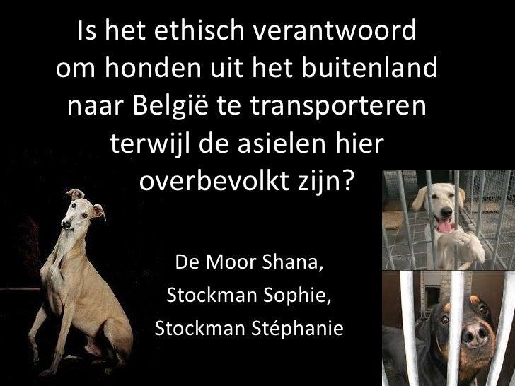 Is het ethisch verantwoord om honden uit het buitenland naar België te transporteren terwijl de asielen hier overbevolkt z...