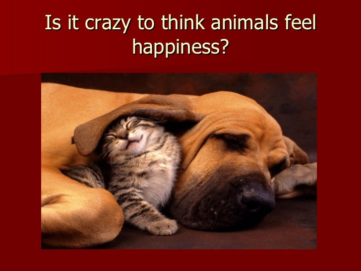 Is it crazy to think animals feel happiness?