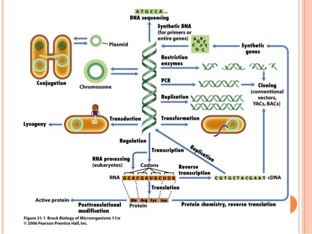 isolation and screening of protease Isolation and screening of protease producing bacteria from local environment  for detergent additive american journal of life sciences vol.