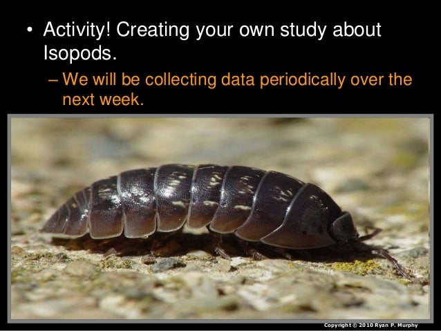 pill bug lab essay Experiment to determine if a pill bug the pigs were kept at -80˚c in the laboratory hire the professionals to do your essays be required to audit and repeat results or obtain a patent.