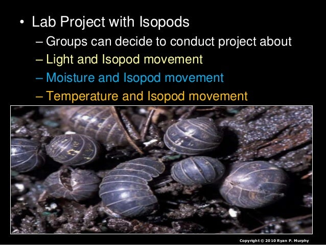 isopod behavior lab report Stephen pidliskey09/15/07p1 parkisopod behavior lab reportbackground information:in our lab we were working with isopods, also.