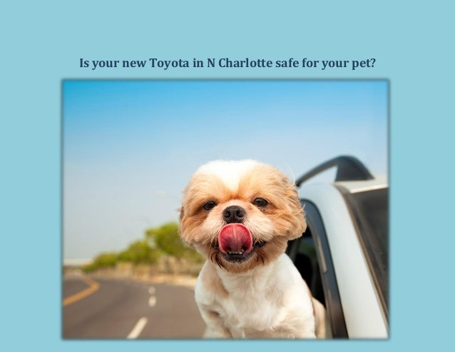 Is your new Toyota in N Charlotte safe for your pet?