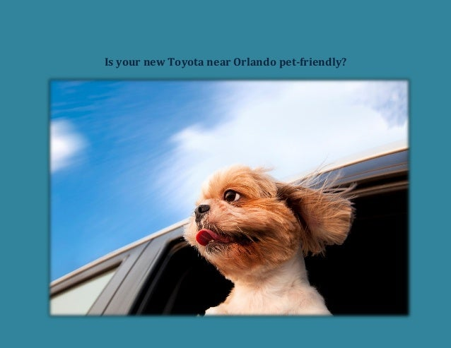 Is your new Toyota near Orlando pet friendly?
