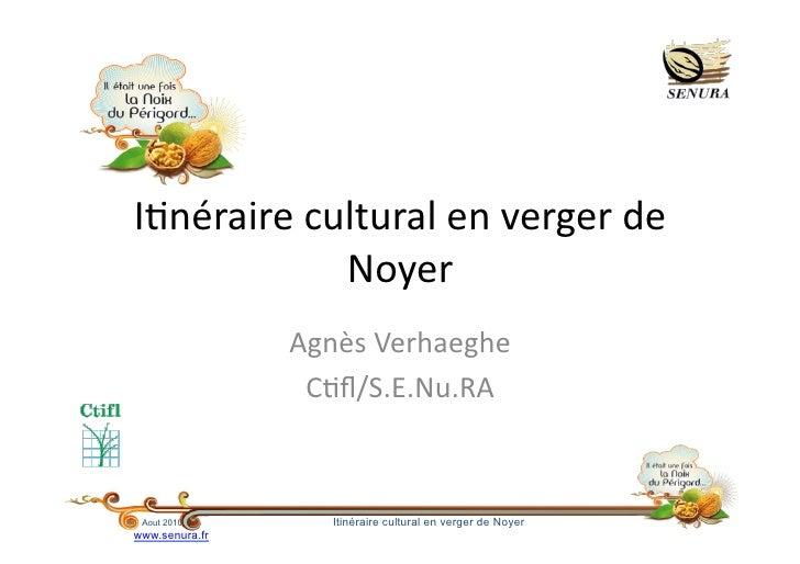 """I""""néraire  cultural  en  verger  de                  Noyer                   Agnès  Verhaeghe             ..."""