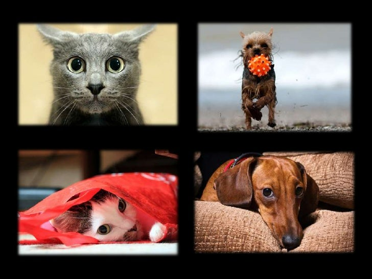 Watch 5 Tips for Teaching Your Pet Its Name video