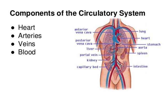 respiratory system research paper